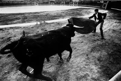 The corrida or bullfight.  Navaluenga, central Spain